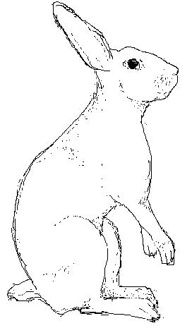 Jänis/Hare, MS Paint, 2003