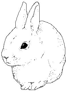 Kaniini/Rabbit, MS Paint, 2003